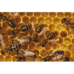 Bee4all  zalf pot  60 gram